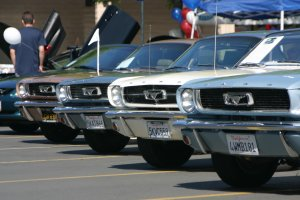 Row of classic Mustangs
