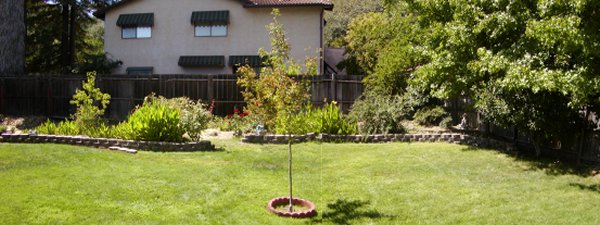 New backyard garden area