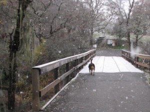 Snow falling in Low Gap park