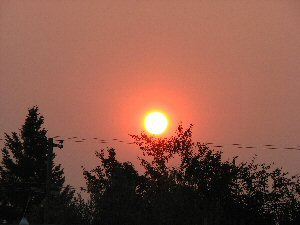 Sunrise during wildfires