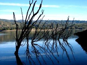 Underwater treeline